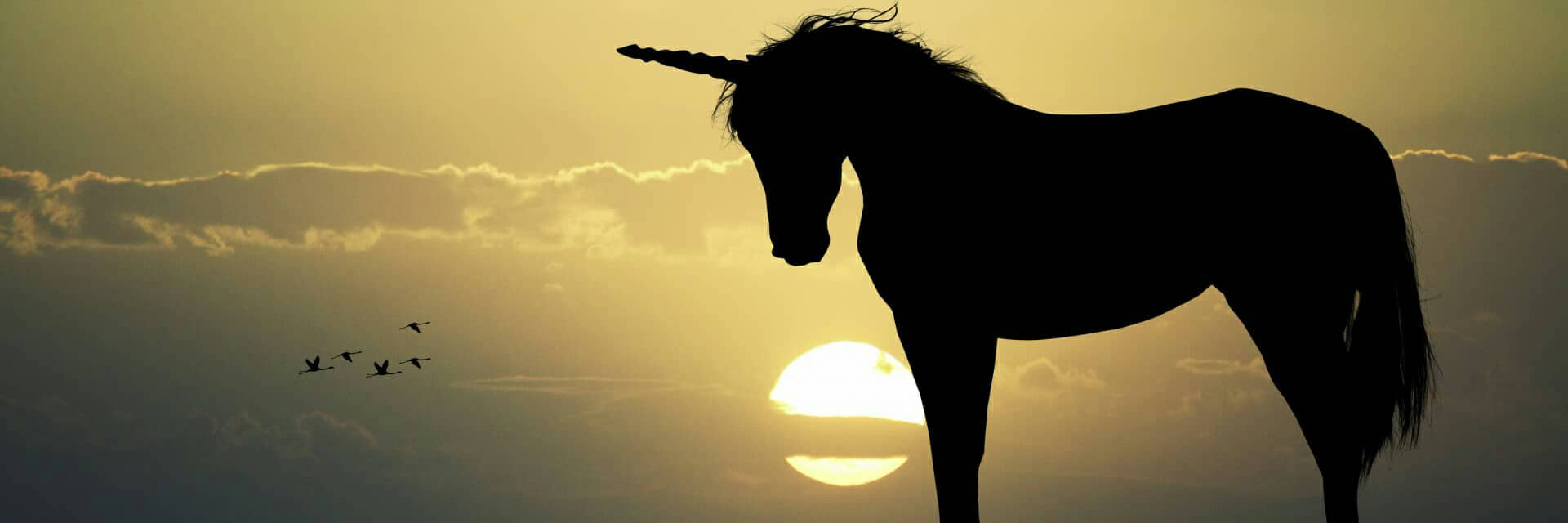 What is a Unicorn Startup?